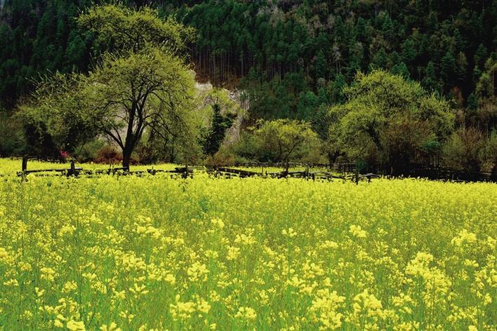 林芝游记:一路相遇便是春色正浓